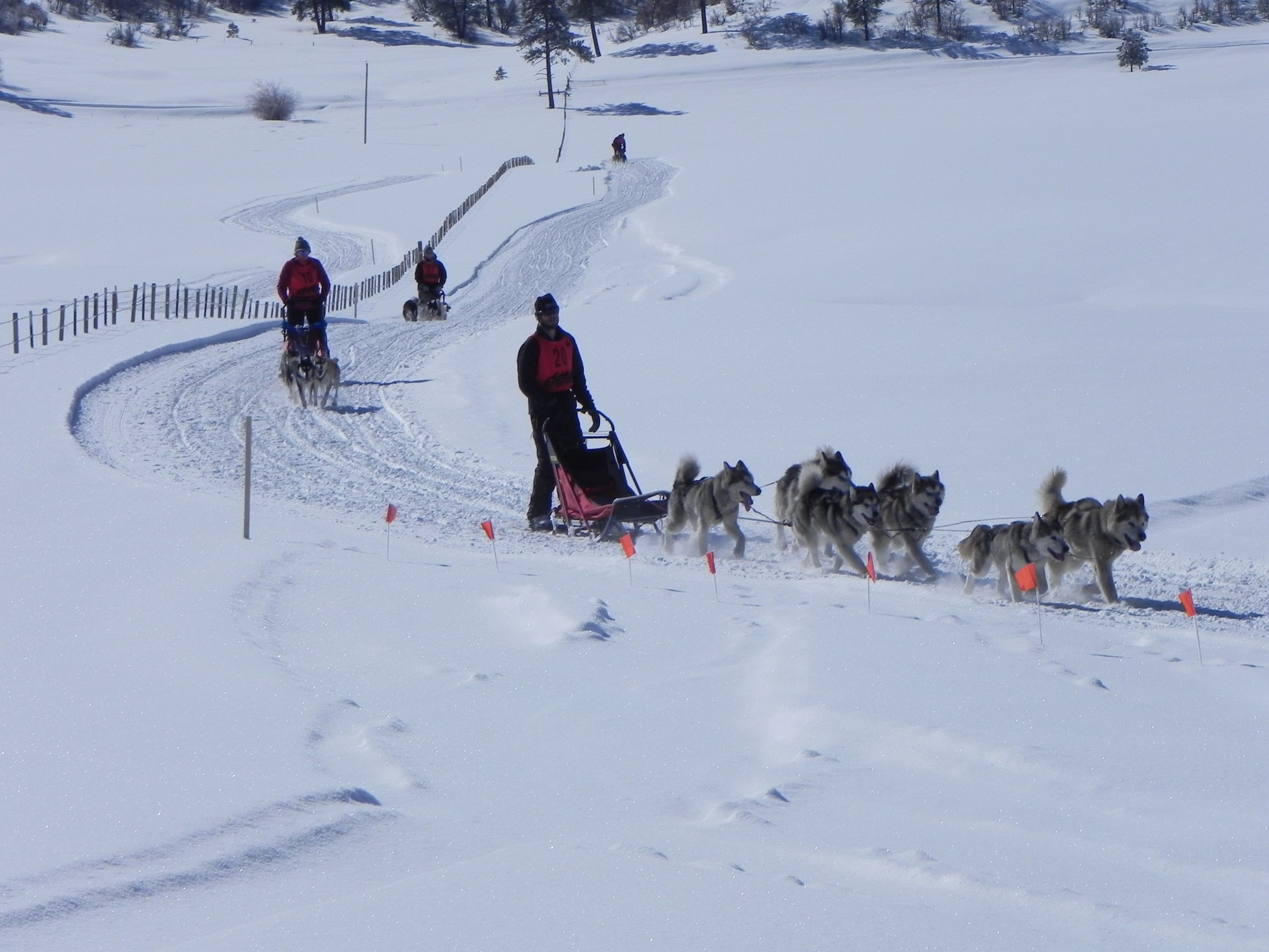 DogSledRaces